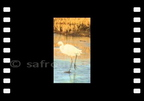 Vive l'hiver - Egret on ice