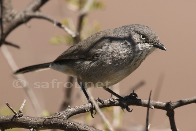Africa Wild Bird Book - Page 122 - Africa Wild